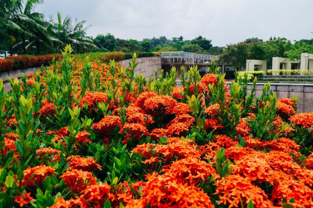 Pokok renek berbunga yang sesuai untuk Landskap Taman anda